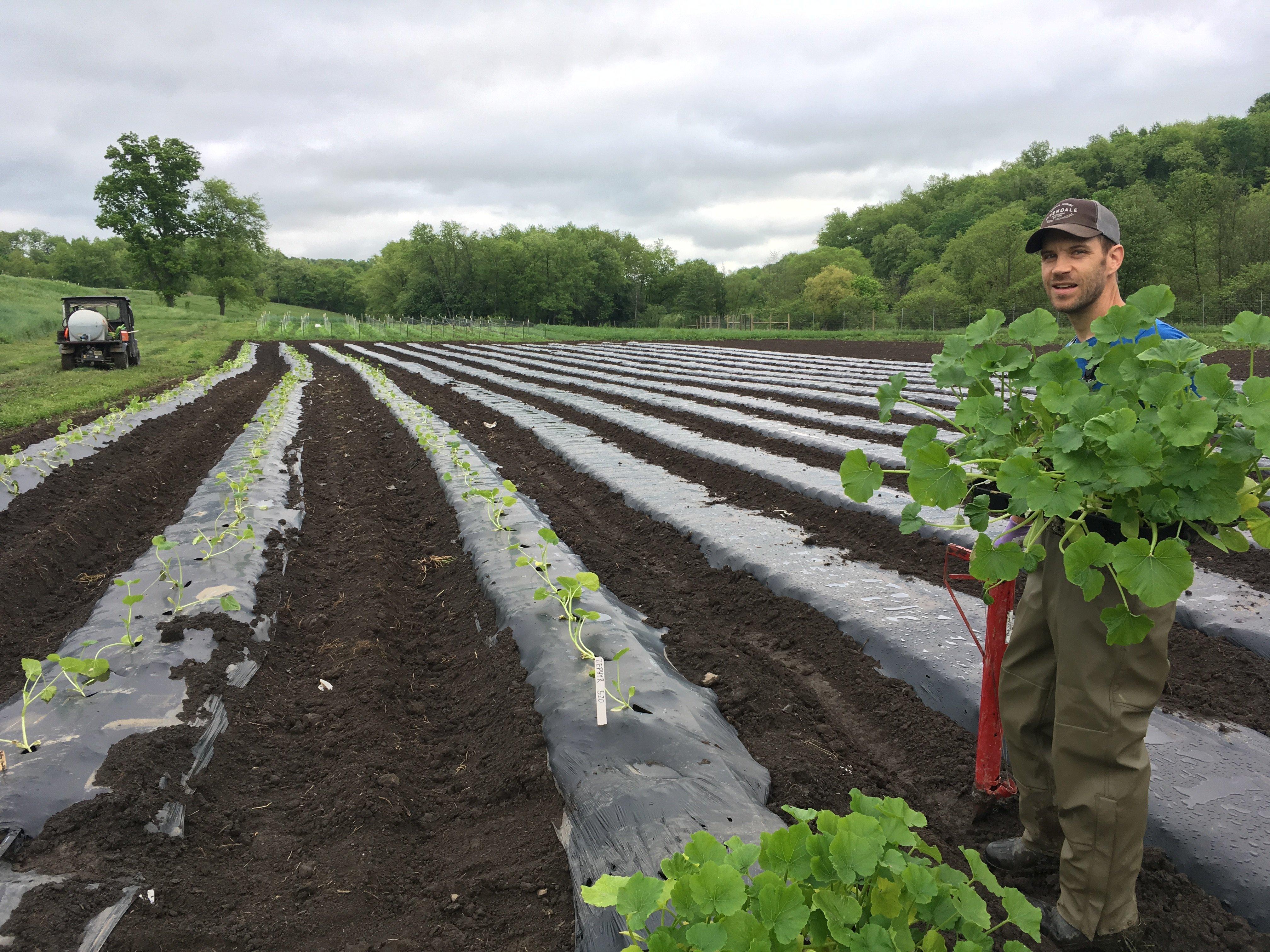 Rivendale Farms CSA Newsletter, Week 2 (June 19)