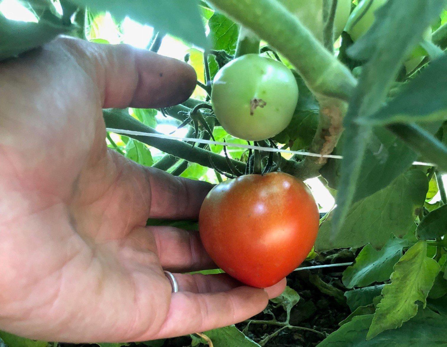 Farm Happenings for July 5, 2018: The Cool-Season/Warm-Season Transition