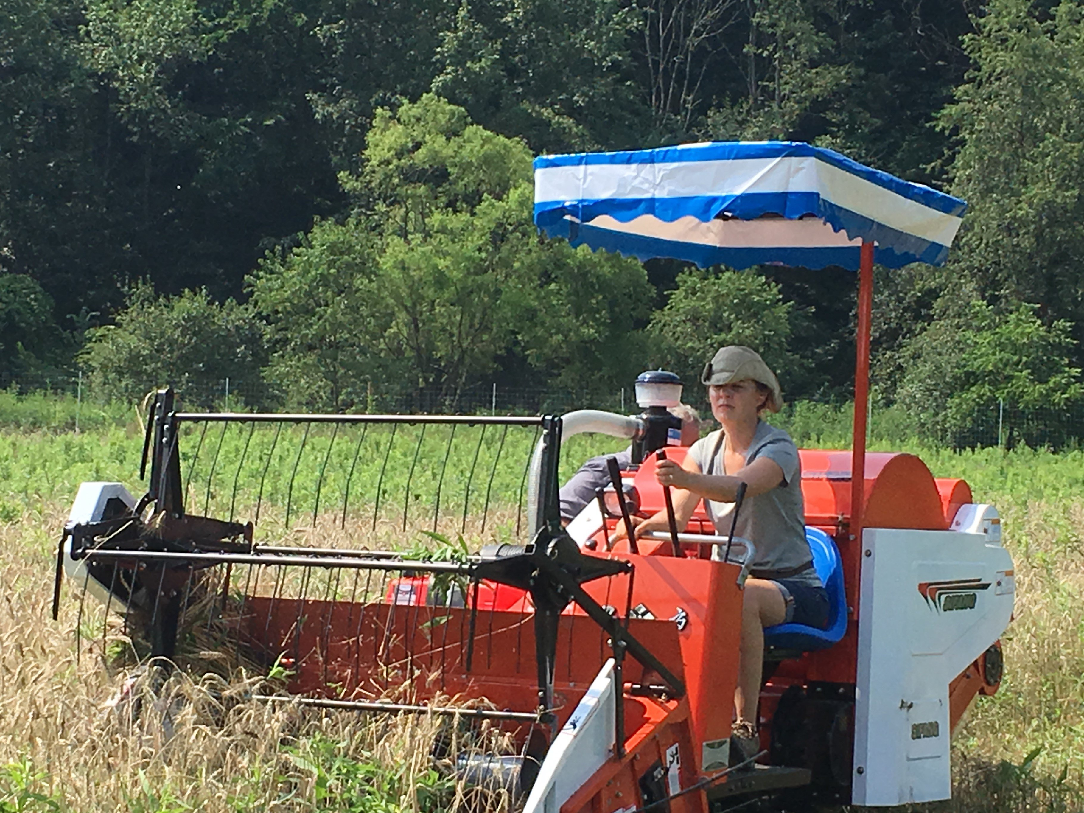 Previous Happening: Rivendale Farms CSA Newsletter, Week 4 (July 3)