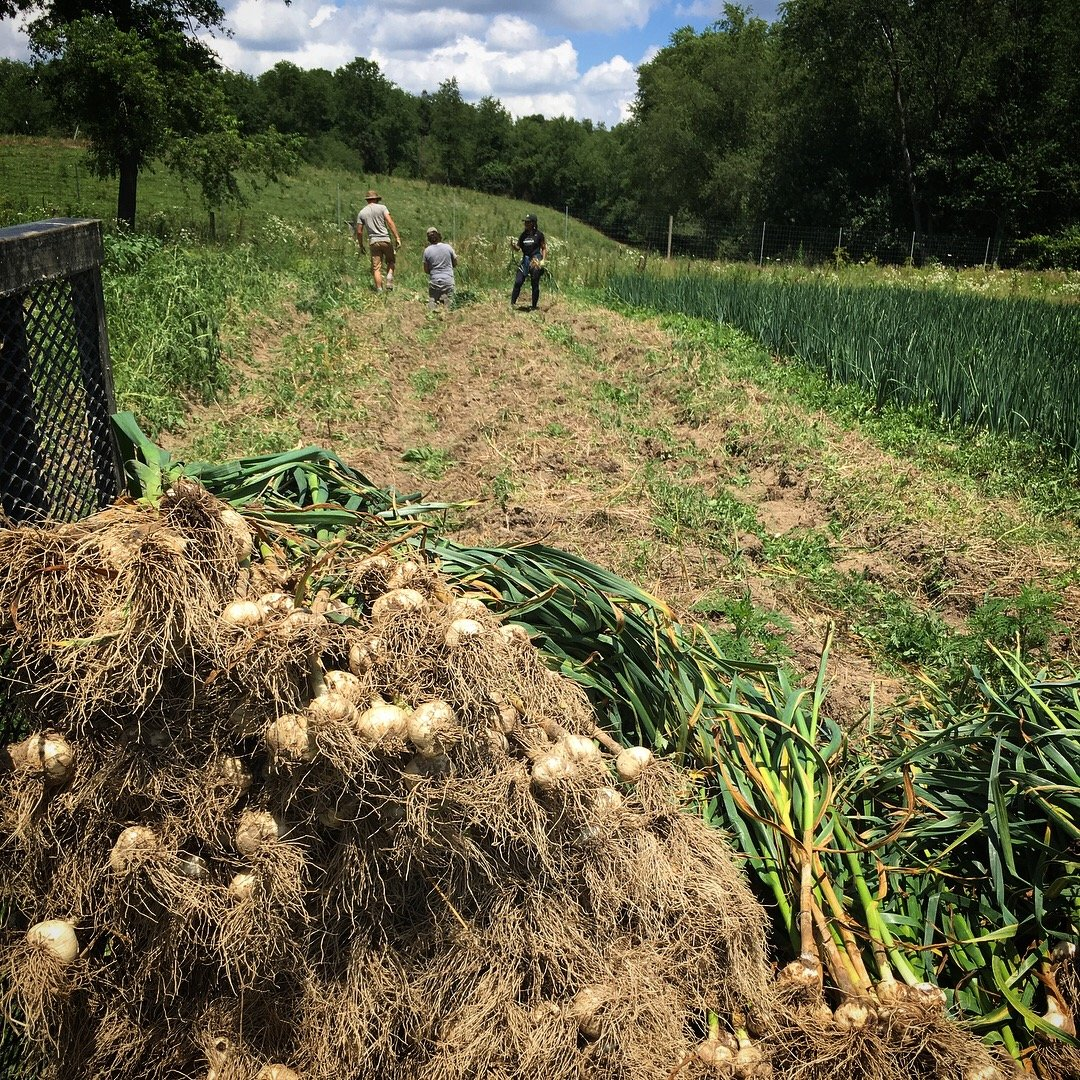 Previous Happening: Rivendale Farms CSA Newsletter, Week 5 (July 10)