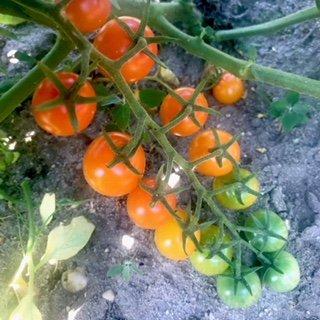 Farm Happenings, CSA Week 7