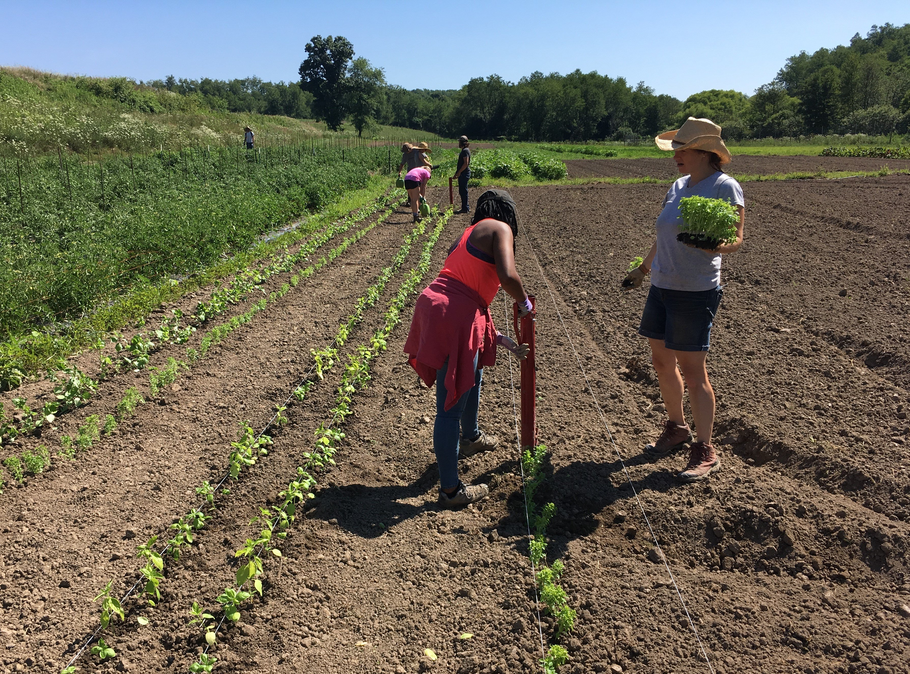 Next Happening: Rivendale Farms CSA Newsletter, Week 7 (July 24)