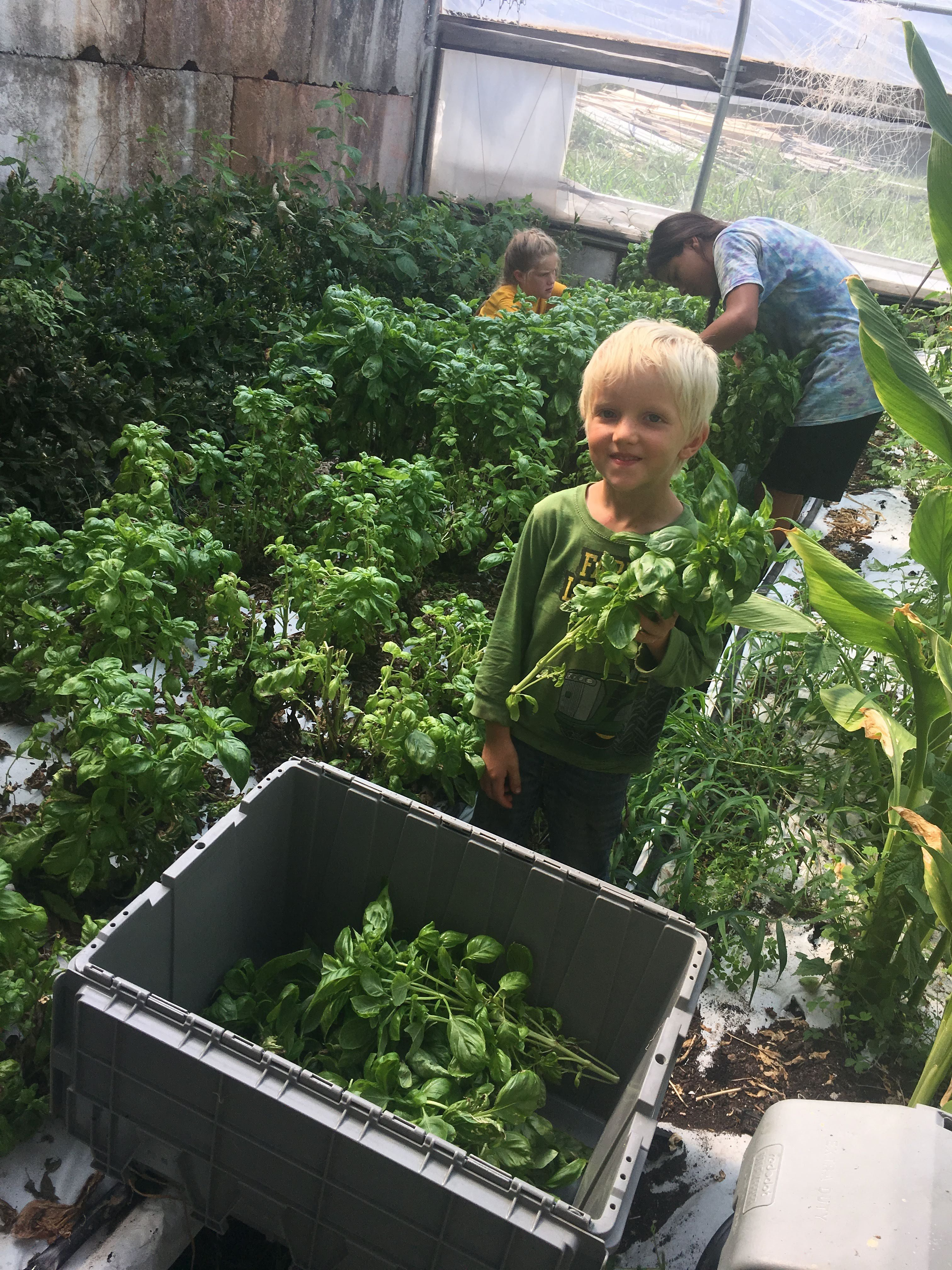 Planting For The Future, Harvesting For The Present