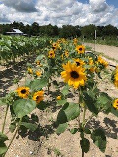 Farm Happenings for August 15-18, 2018