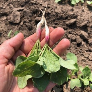 Previous Happening: Farm Happenings for August 22, 2018: CSA Info