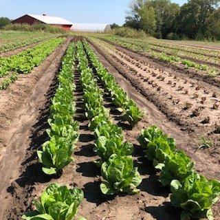 Farm Happenings for September 19, 2018: Week 16 of 20
