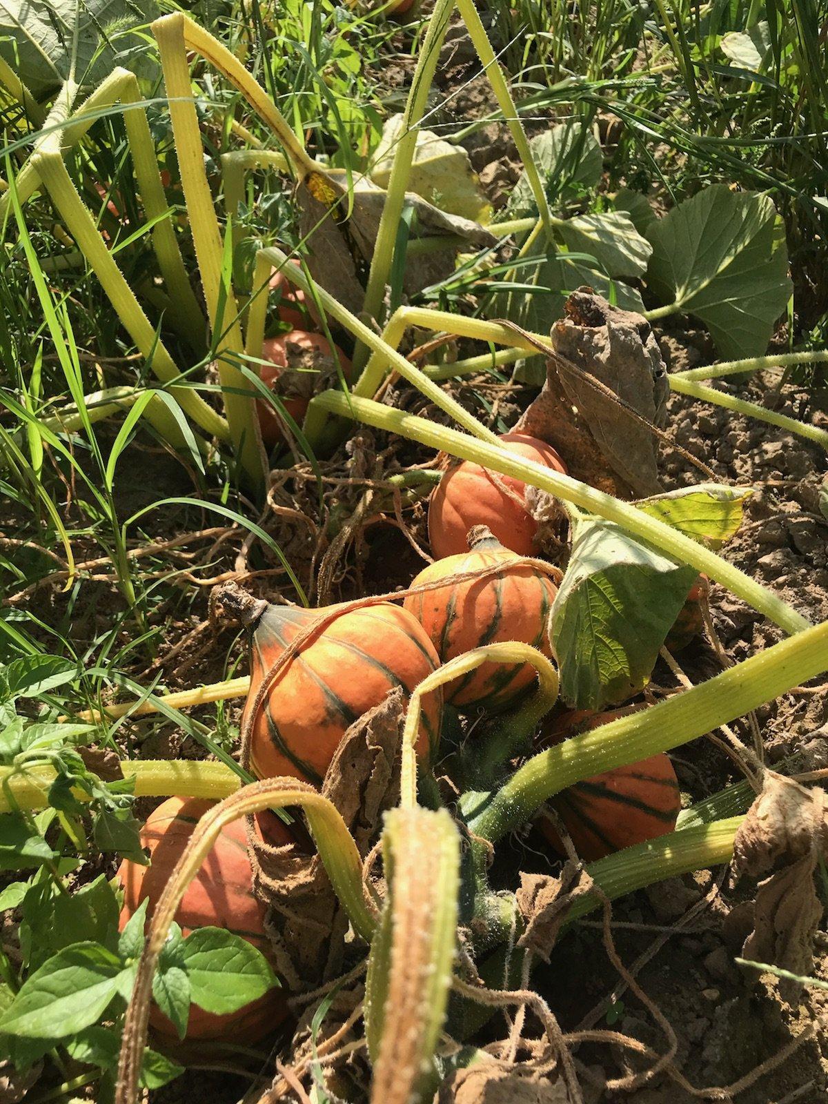 Farm Happenings for October 3, 2018