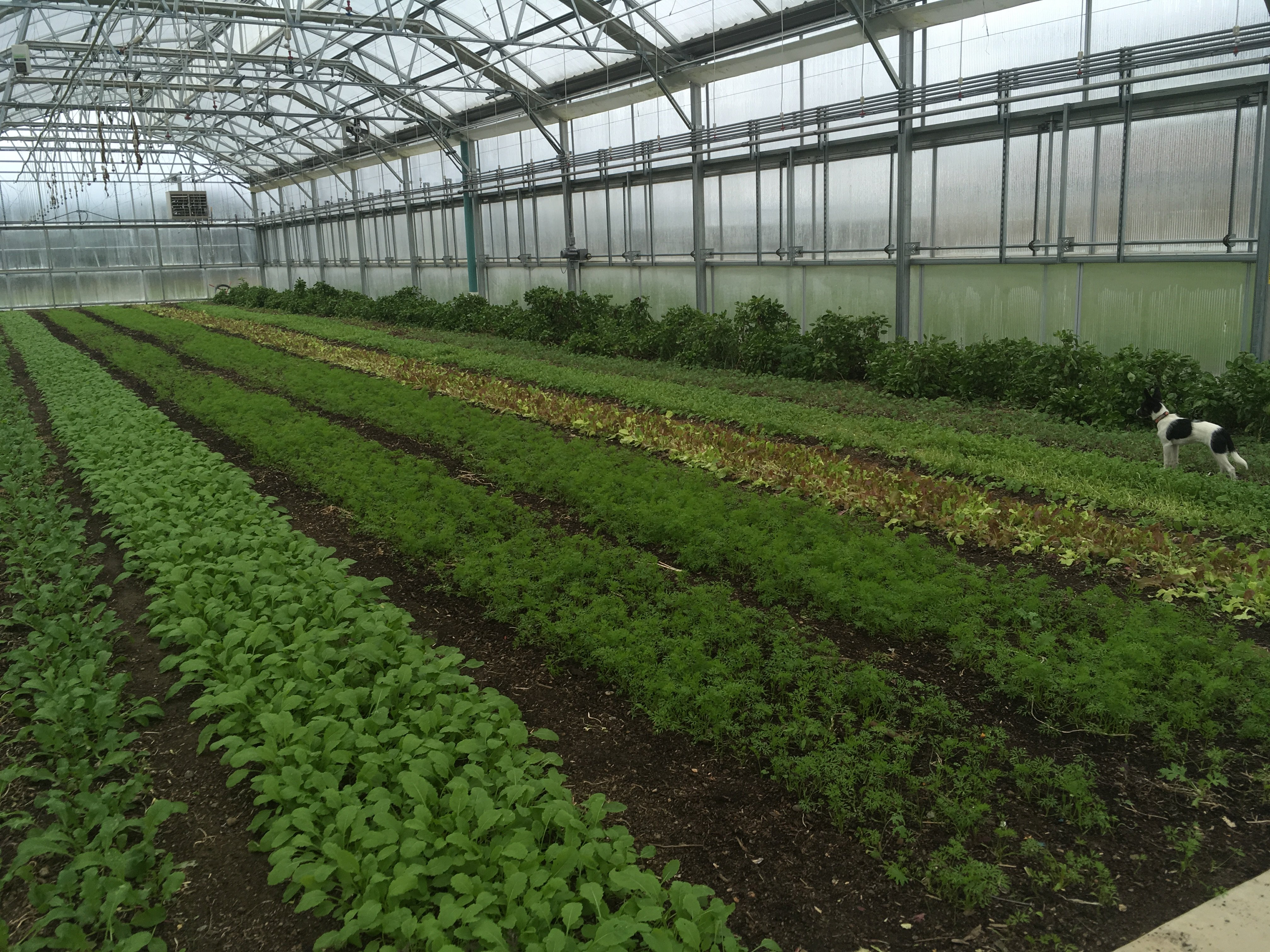 Rivendale Farms CSA Newsletter, Week 21 (Oct 30)