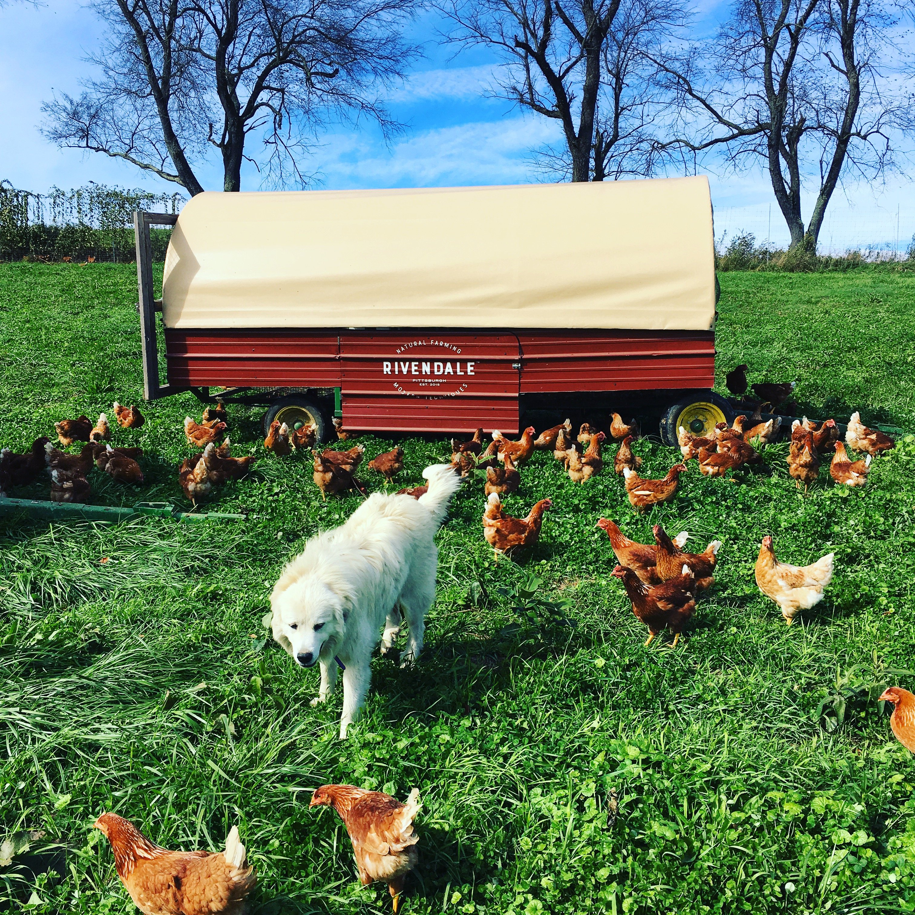Previous Happening: Rivendale Farms CSA Newsletter, Week 22 (Nov 6)