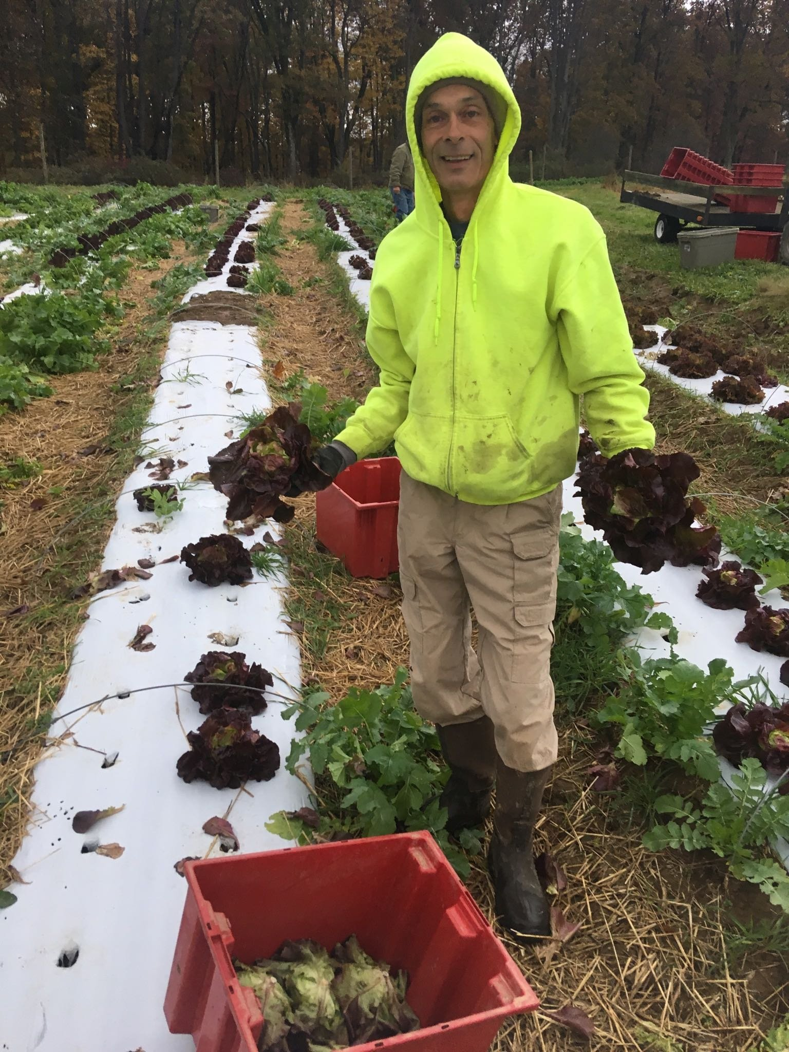 Farm Happening for Fall Share, Week 2