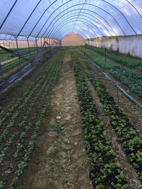 Farm Happenings for December 10, 2018