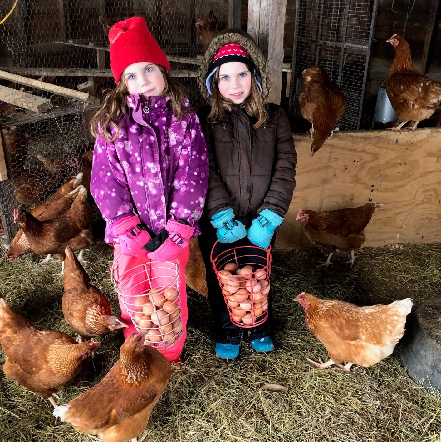 Farm Happenings for March, 20, 2019: the LAST Winter CSA Pick Up!
