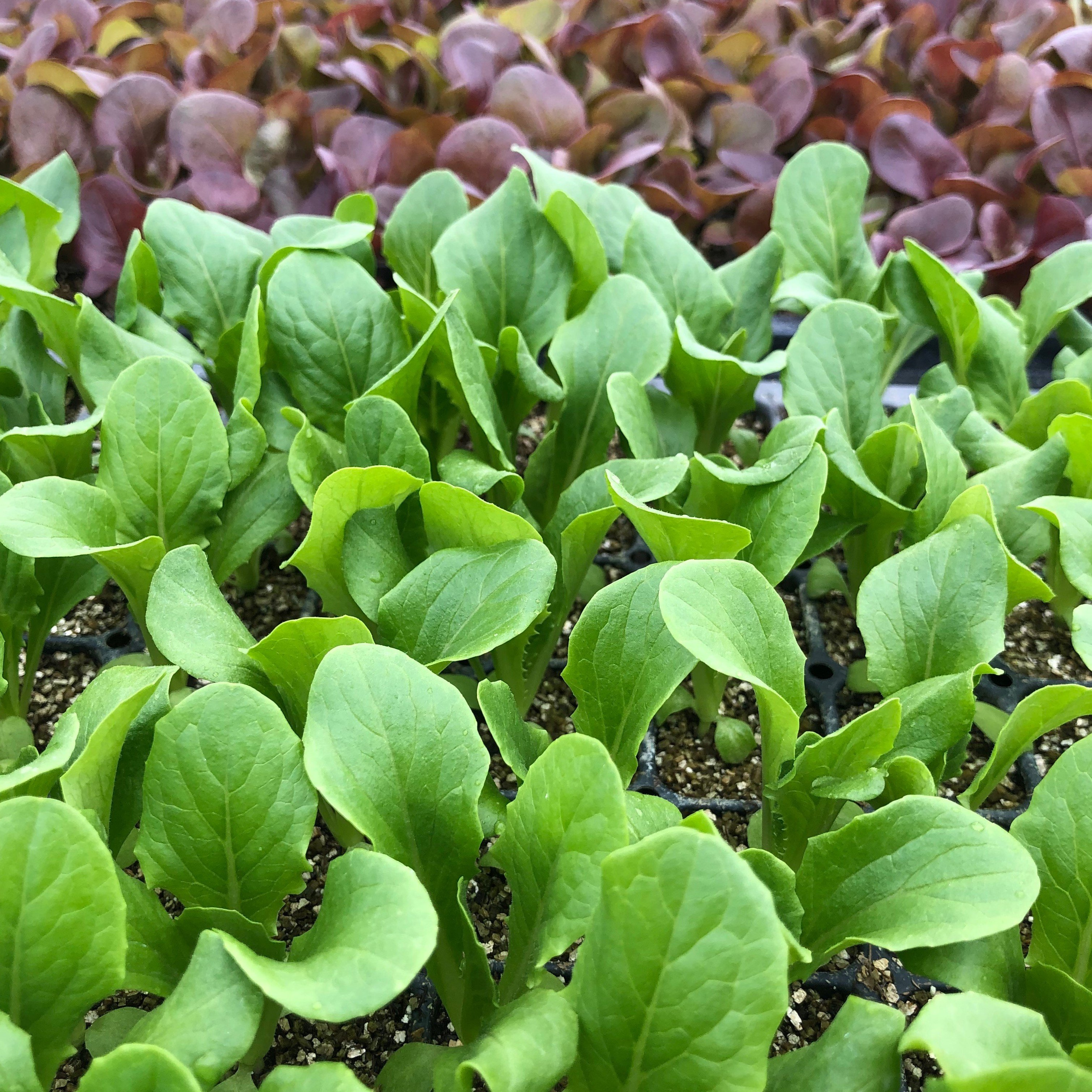 Farm Happenings for April 3, 2019: FIRST SPRING CSA!