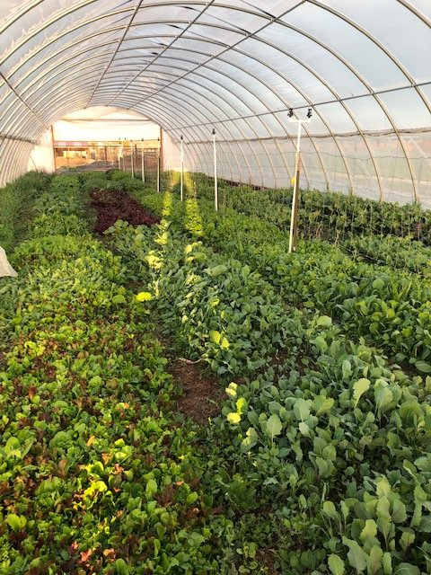 Farm Happenings for May 1, 2019
