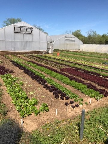 """""""What's the Point?"""" - Farm Happenings for April 30, 2019"""