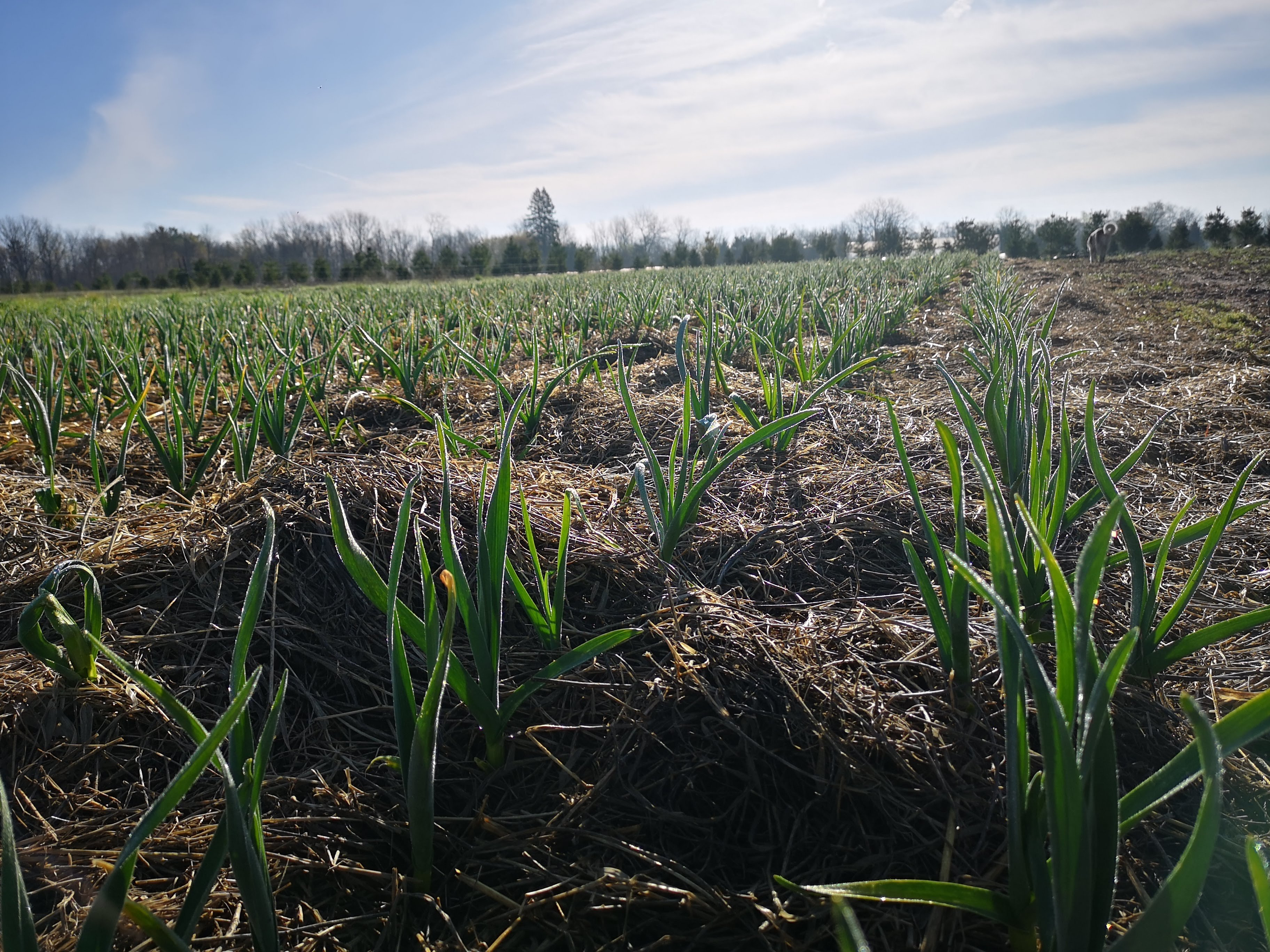 Previous Happening: Farm Happenings for May 9, 2019
