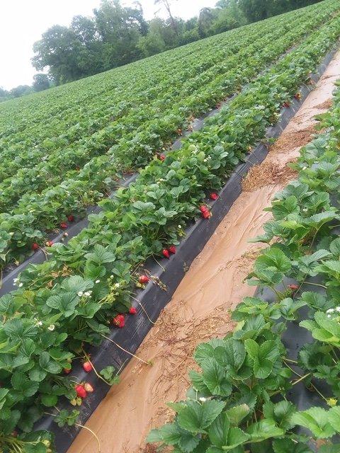 Week 2: Some Tips to Learn & Rhubarb