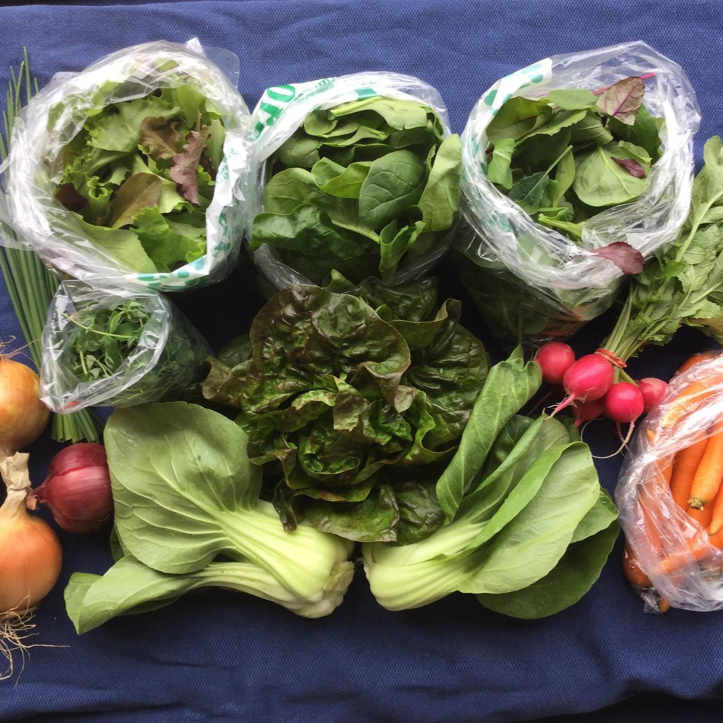 Previous Happening: Spring Share: Week 2