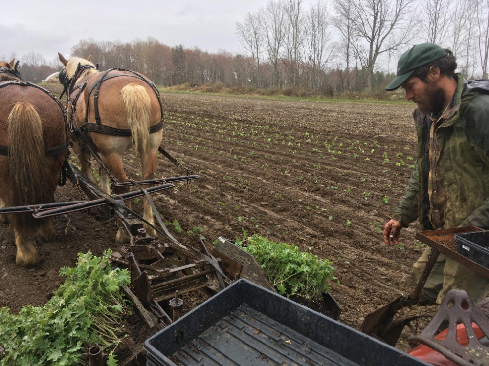 Farm Happenings for May 28, 2019