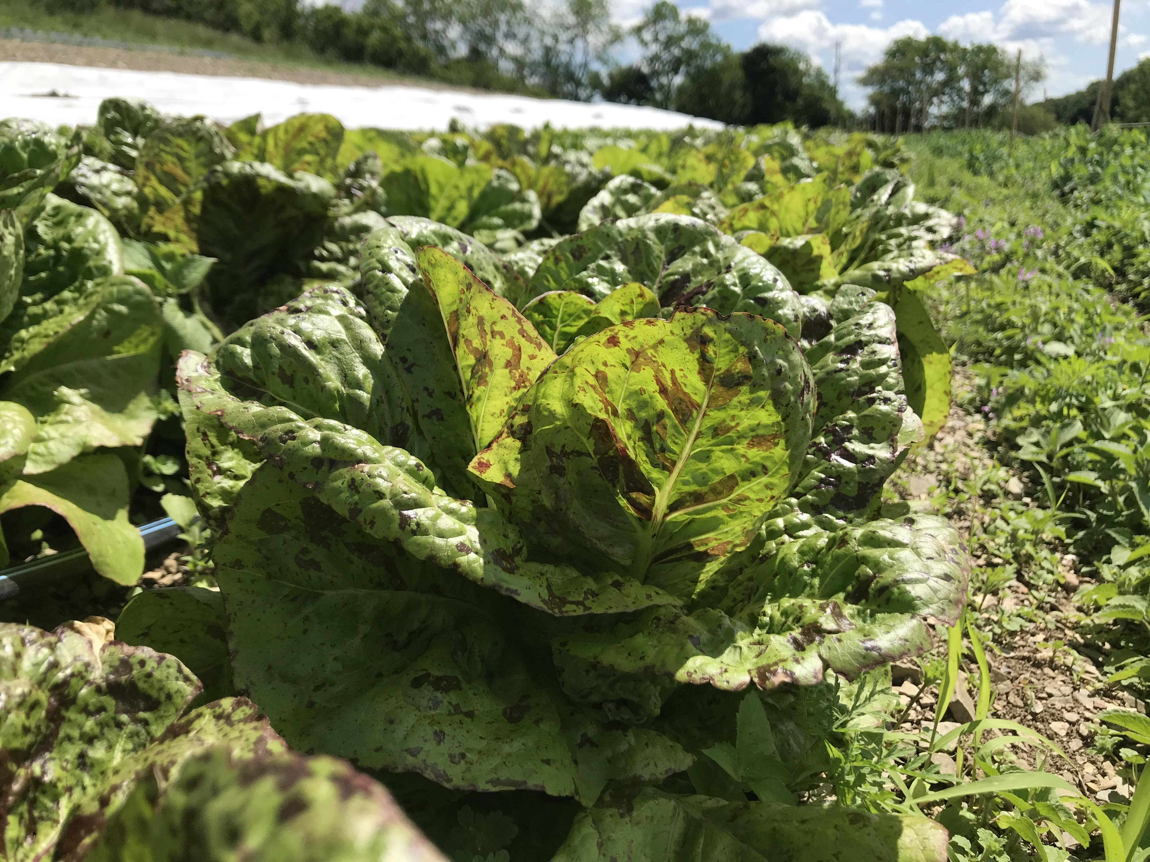 Tips for the First Week of your Farm Share CSA box