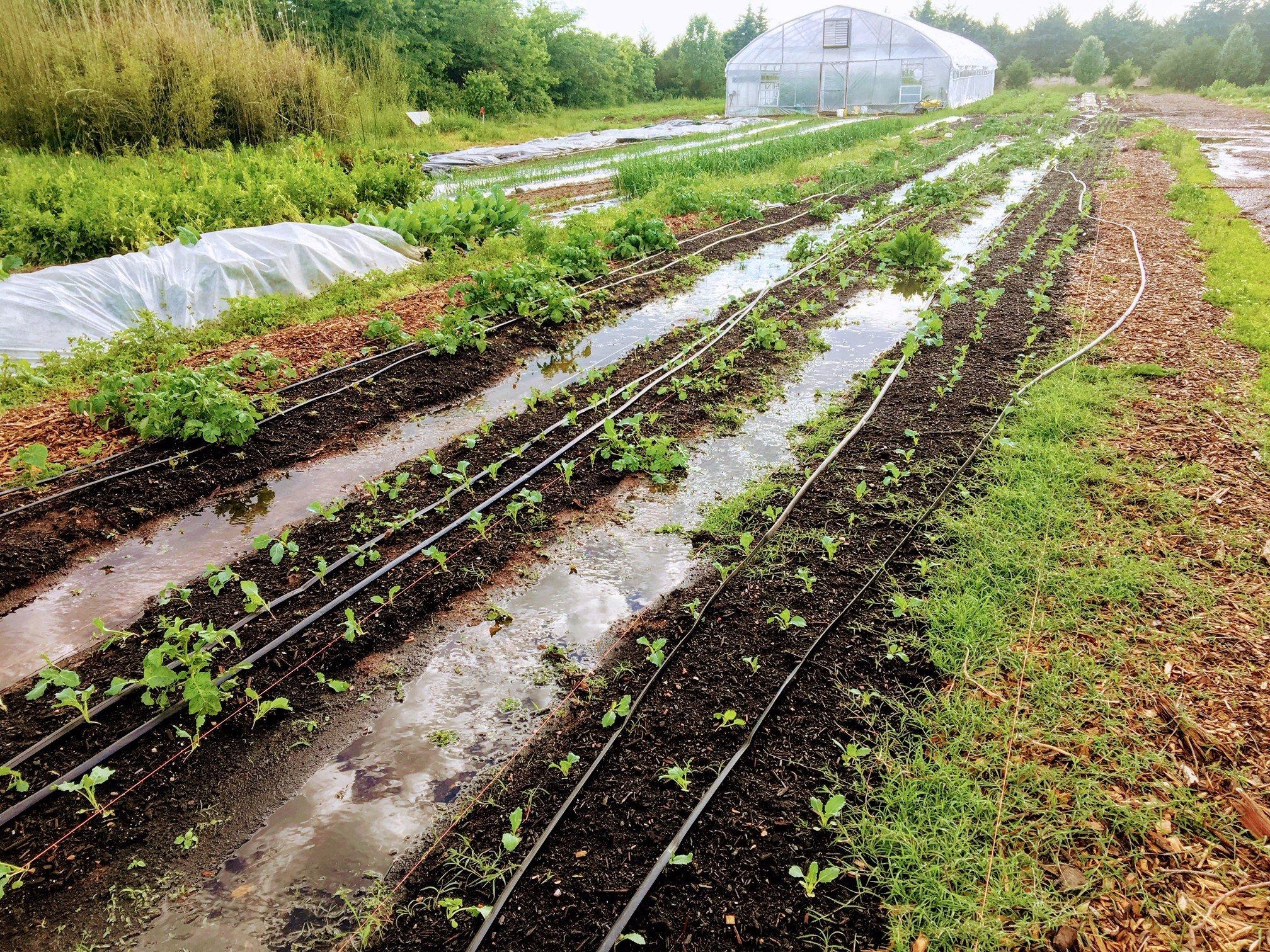 Farm Happenings for June 1, 2019