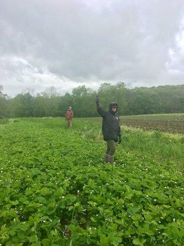 Farm Happenings for Week 1