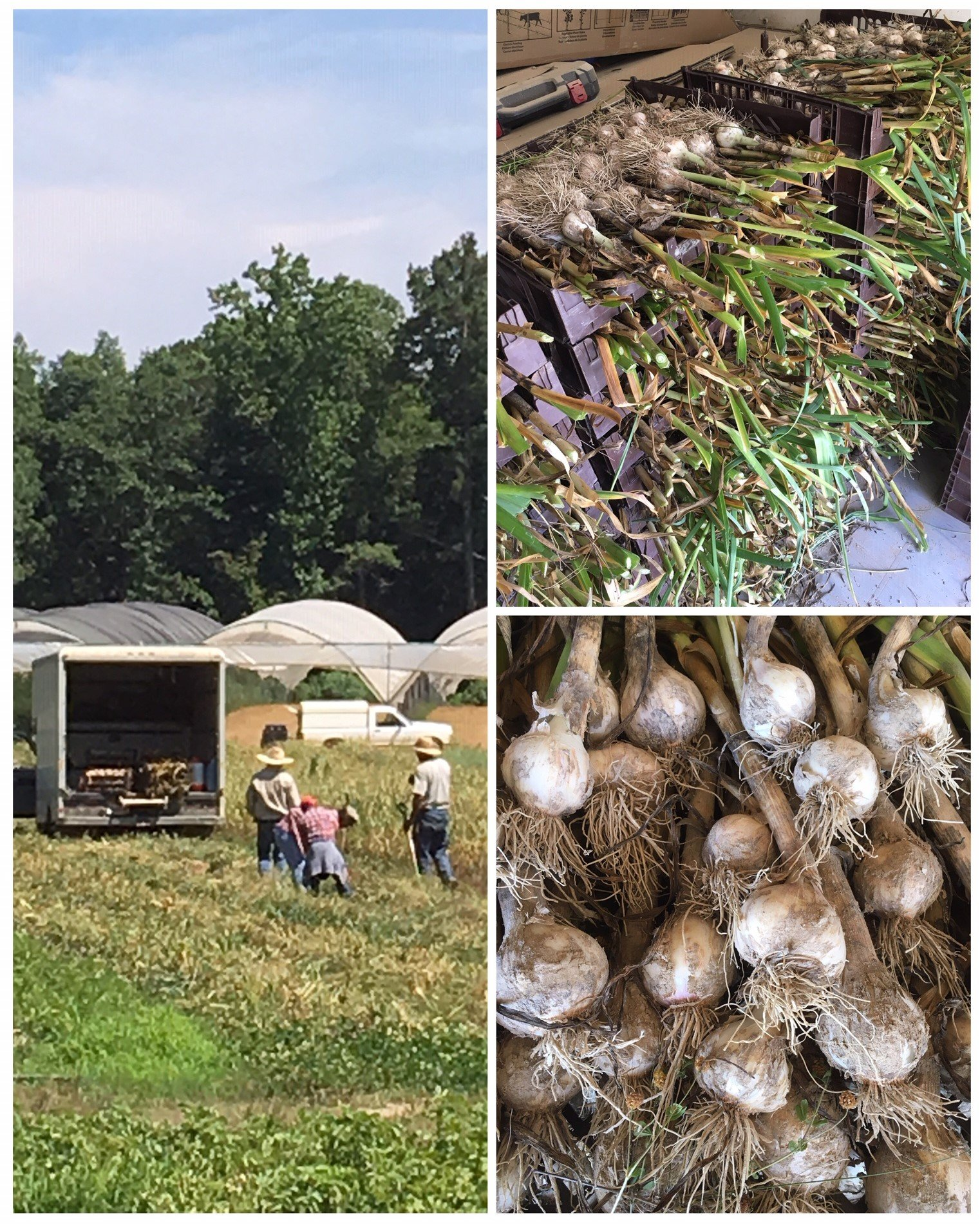 Farm Happenings for June 3, 2019