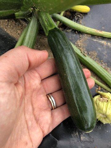 Farm Happenings Week 2