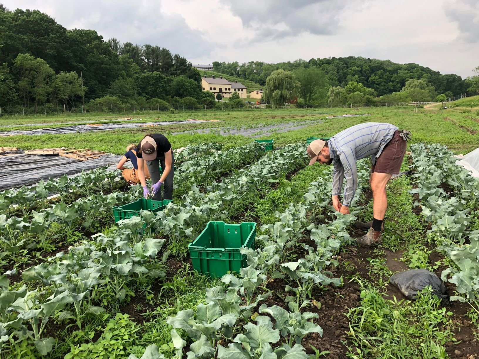 Farm Happenings for June 11, 2019 (week 1)
