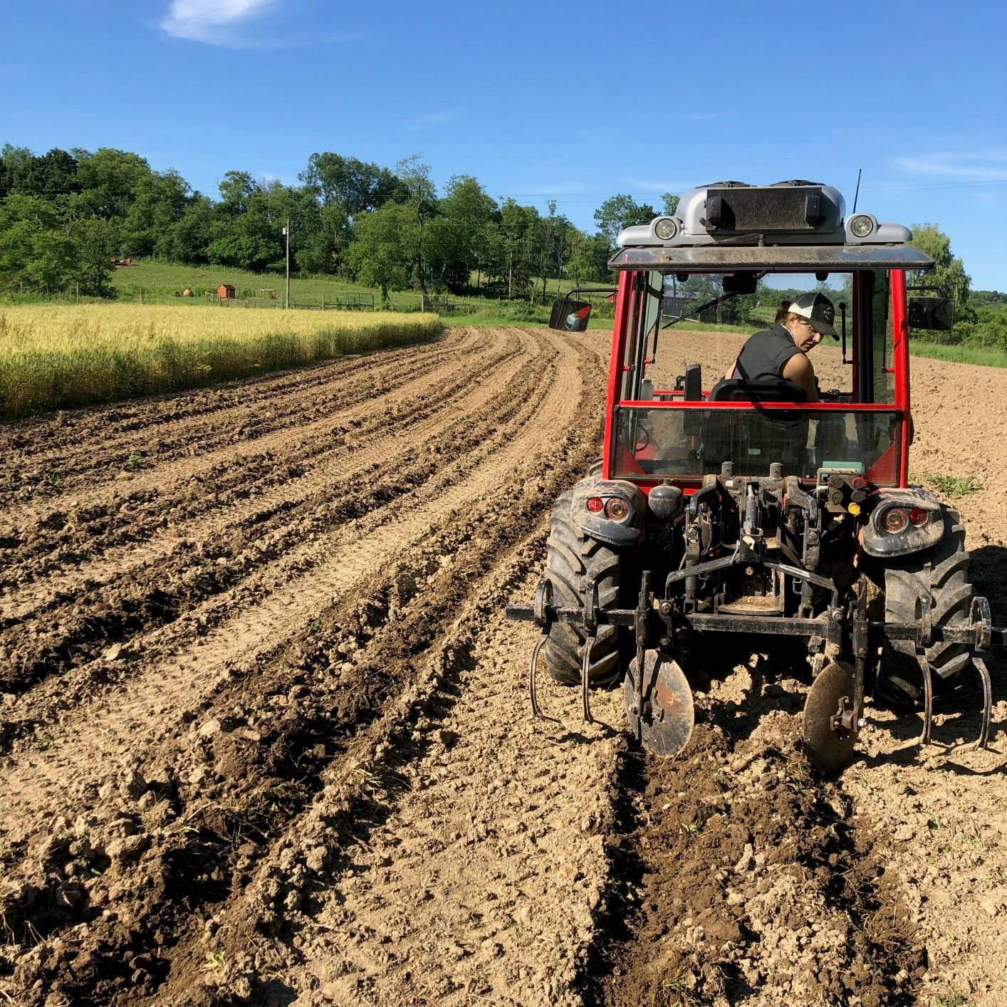Farm Happenings for June 18, 2019 (week 2)
