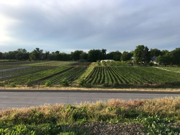 Farm Happenings for June 18, 2019
