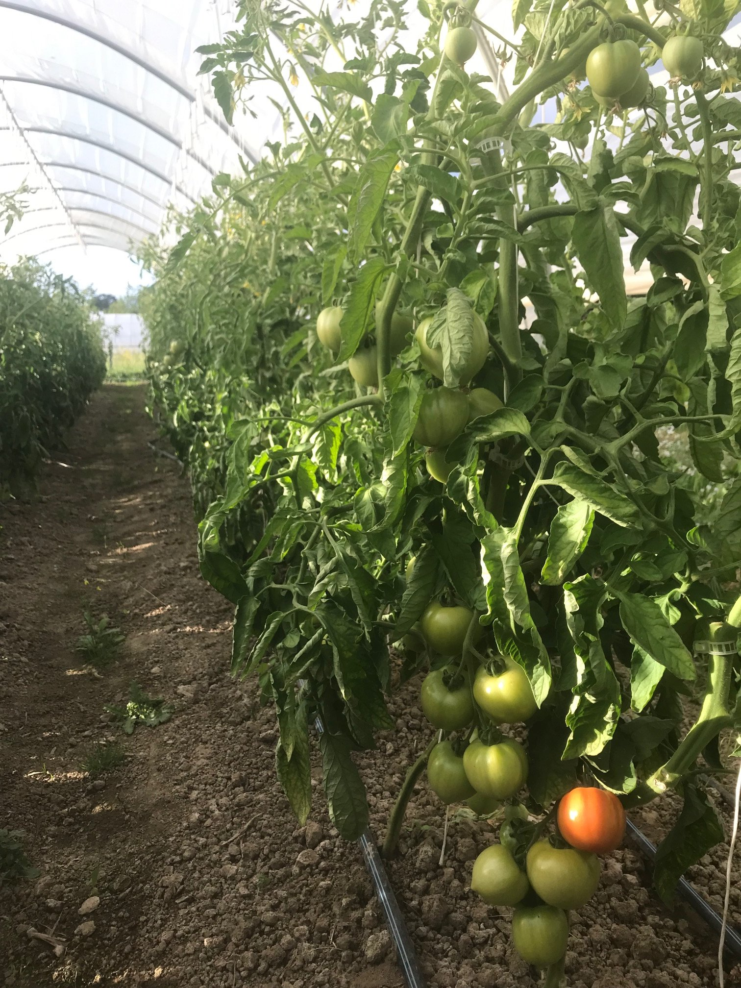 Farm Happenings for June 25, 2019
