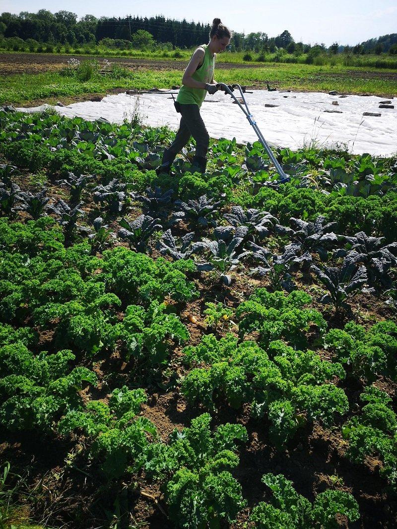 Next Happening: Farm Happenings for June 27, 2019