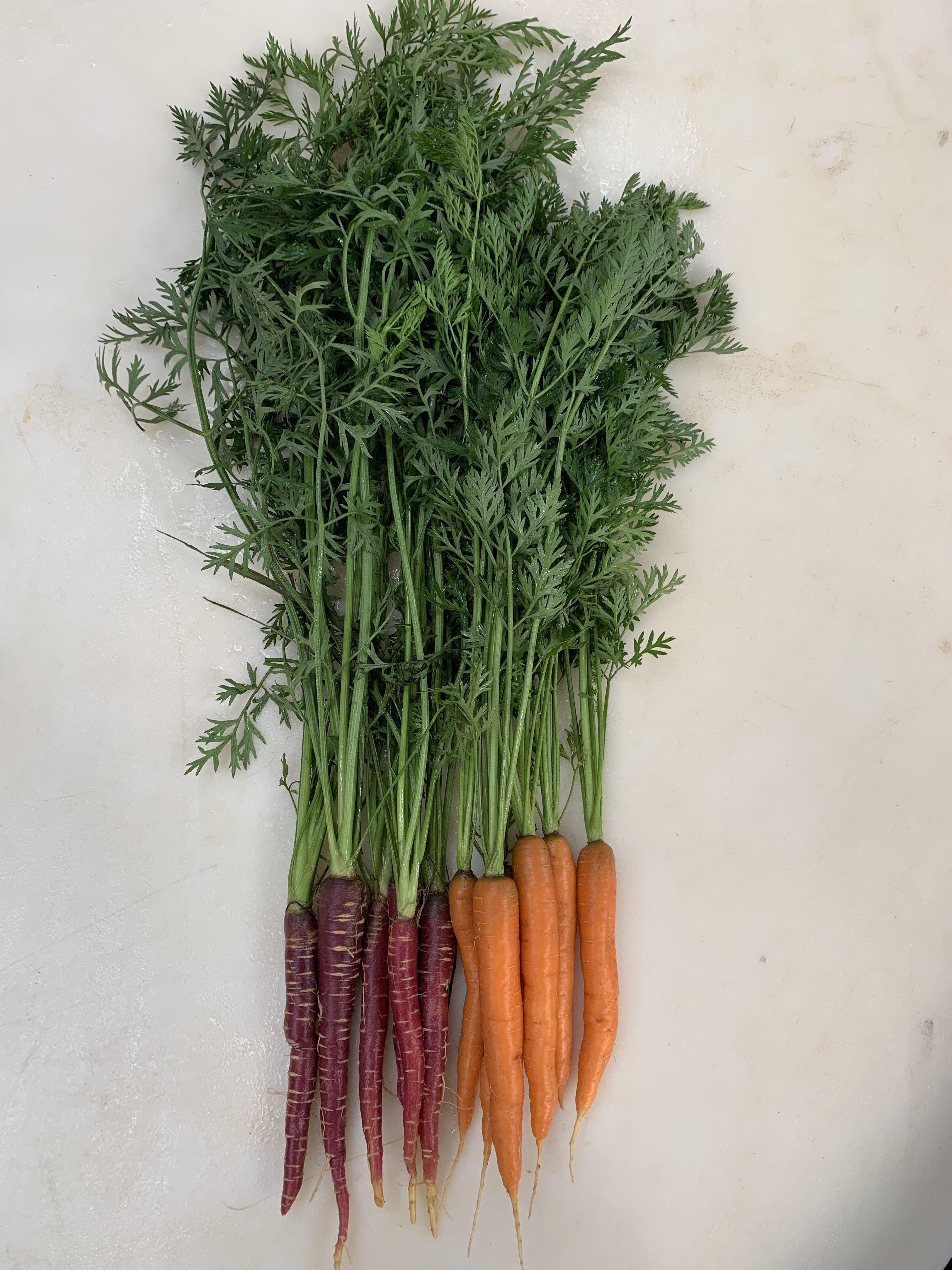 Farm Happenings for July 1, 2019