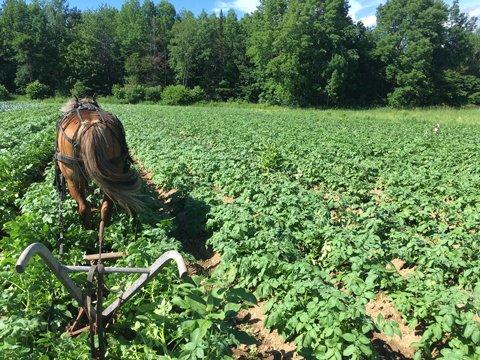 Farm Happenings for July 9, 2019
