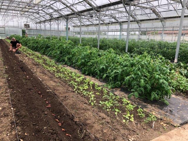 Farm Happenings for July 9, 2019 (week 5)