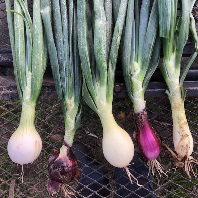 Farm Happenings for July 10, 11, and 13, 2019: Week 6 out of 16!
