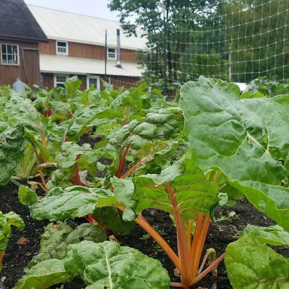 Farm Happenings for July 10, 2019