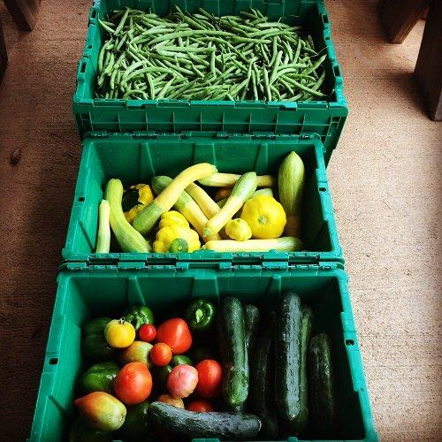 Heat and Harvest!