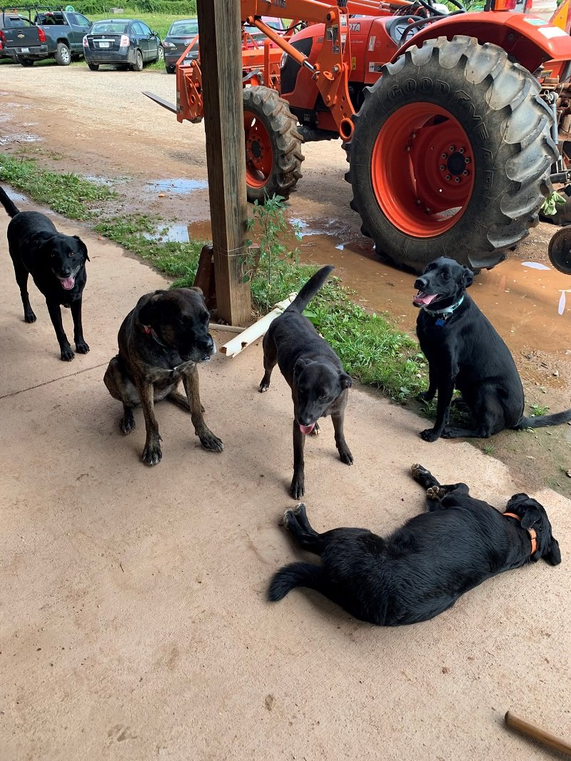 Know Your Farm Dogs