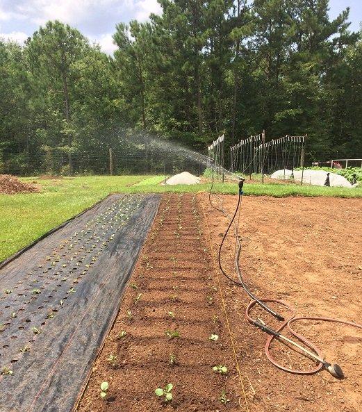 Thankful for Irrigation!