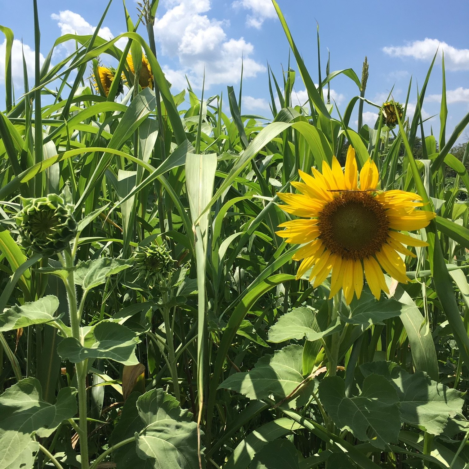 Uncovering Cover Crops