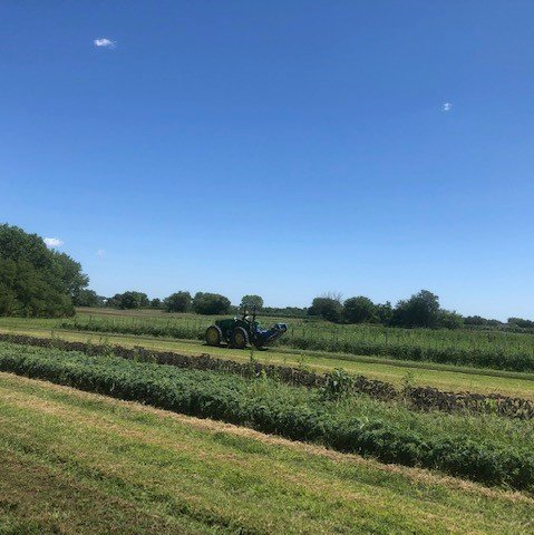Farm Happenings for August 7, 8, and 10, 2019: Week 10 of 16!