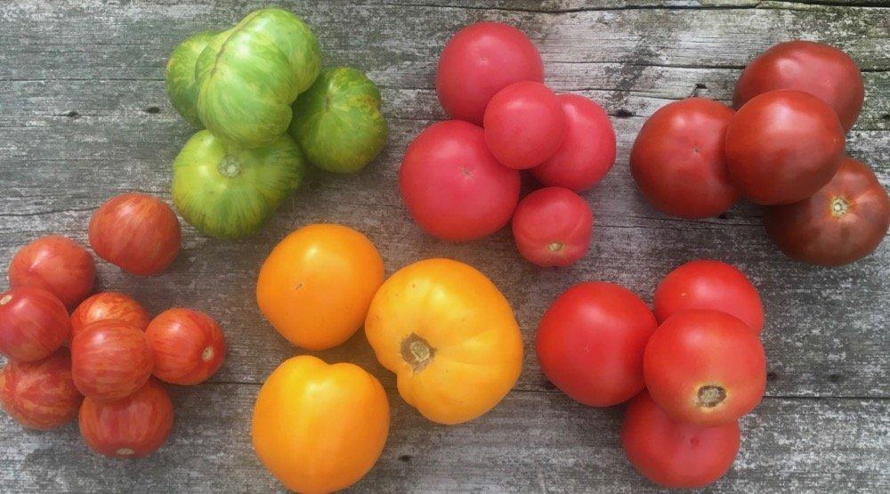 Next Happening: Tomato Season