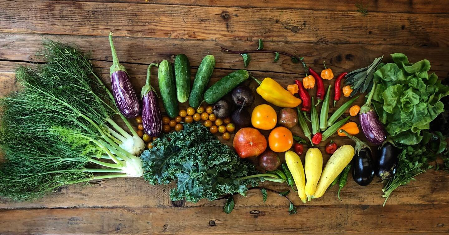 Farm Happenings for Mid-August