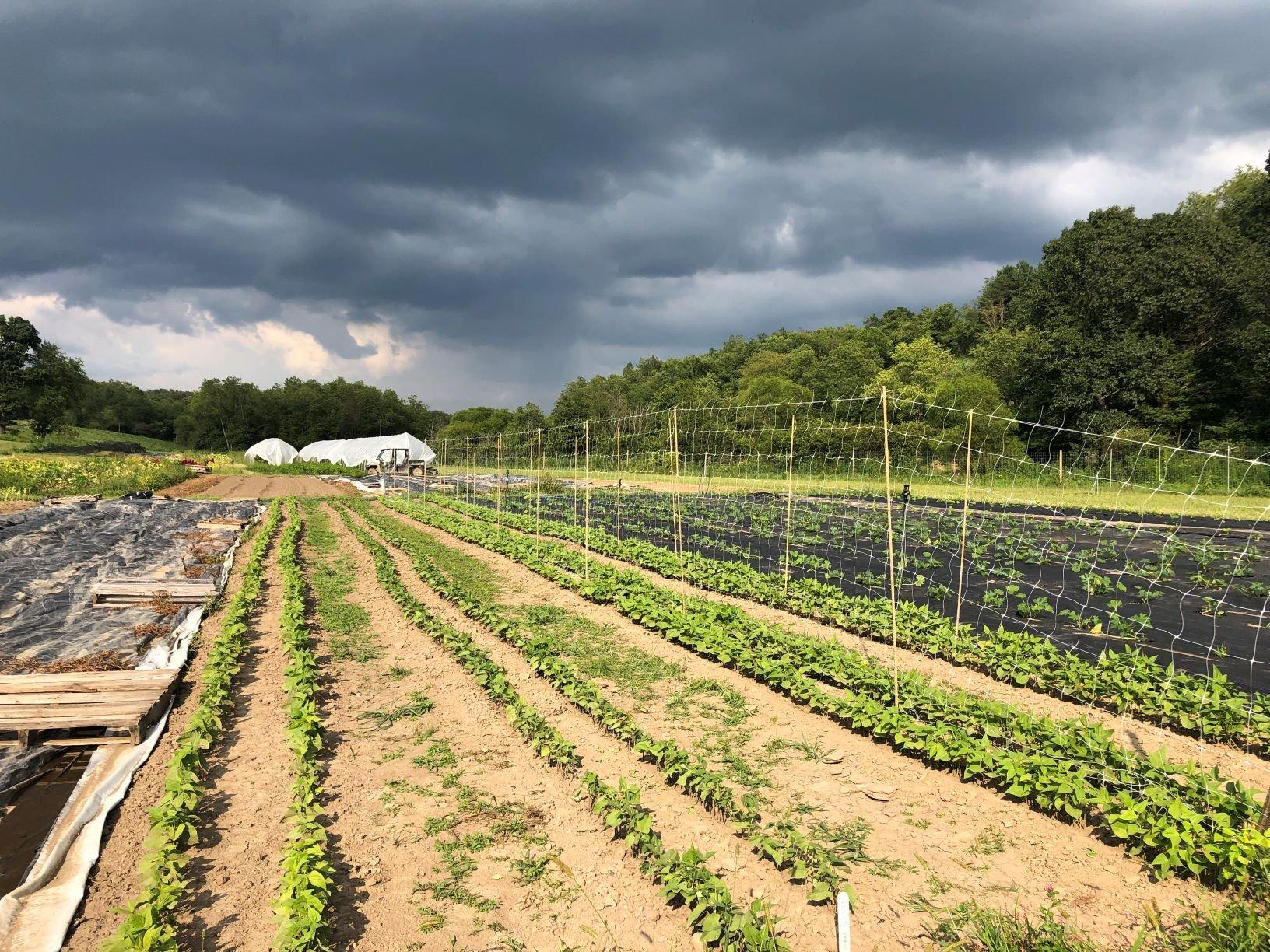 Next Happening: Farm Happenings for August 27, 2019 (week 12)