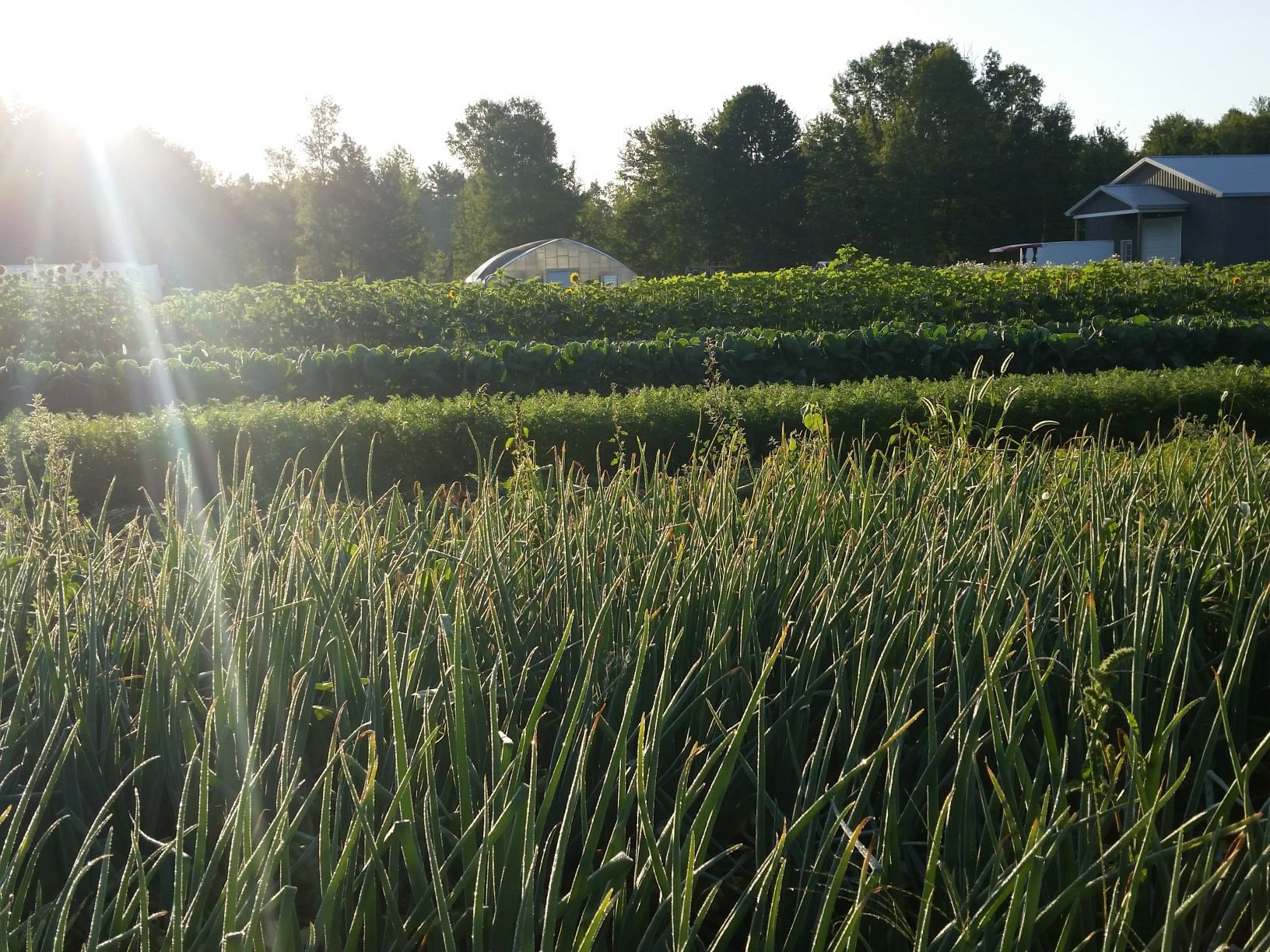 Previous Happening: Farm Happenings for August 29 & 30, 2019