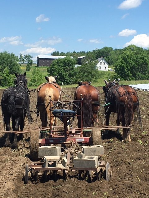 Farm Happenings for August 27, 2019, AUTO RENEW THIS THURSDAY 8/29