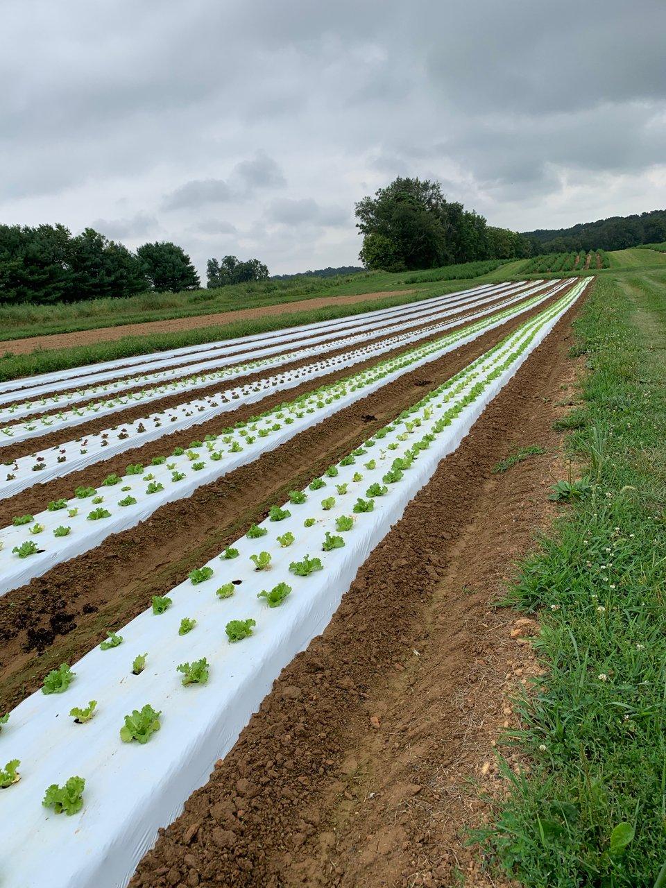 Farm Happenings for September 3, 2019