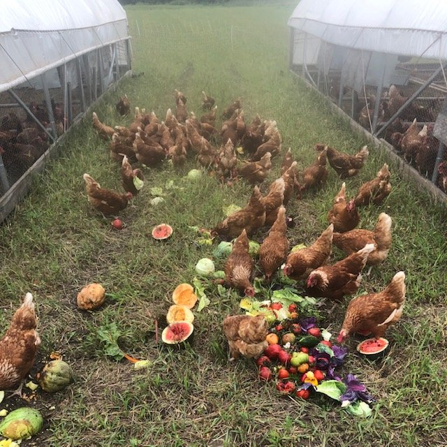 Farm Happenings for September 4, 5, and 7, 2019: Week 14 out of 16!
